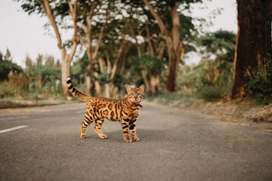 a485aa5be340e716e69b5a2dd9b66608 Гэрэл зурагчдын дуранд буусан амьтдын шилдэг зургууд